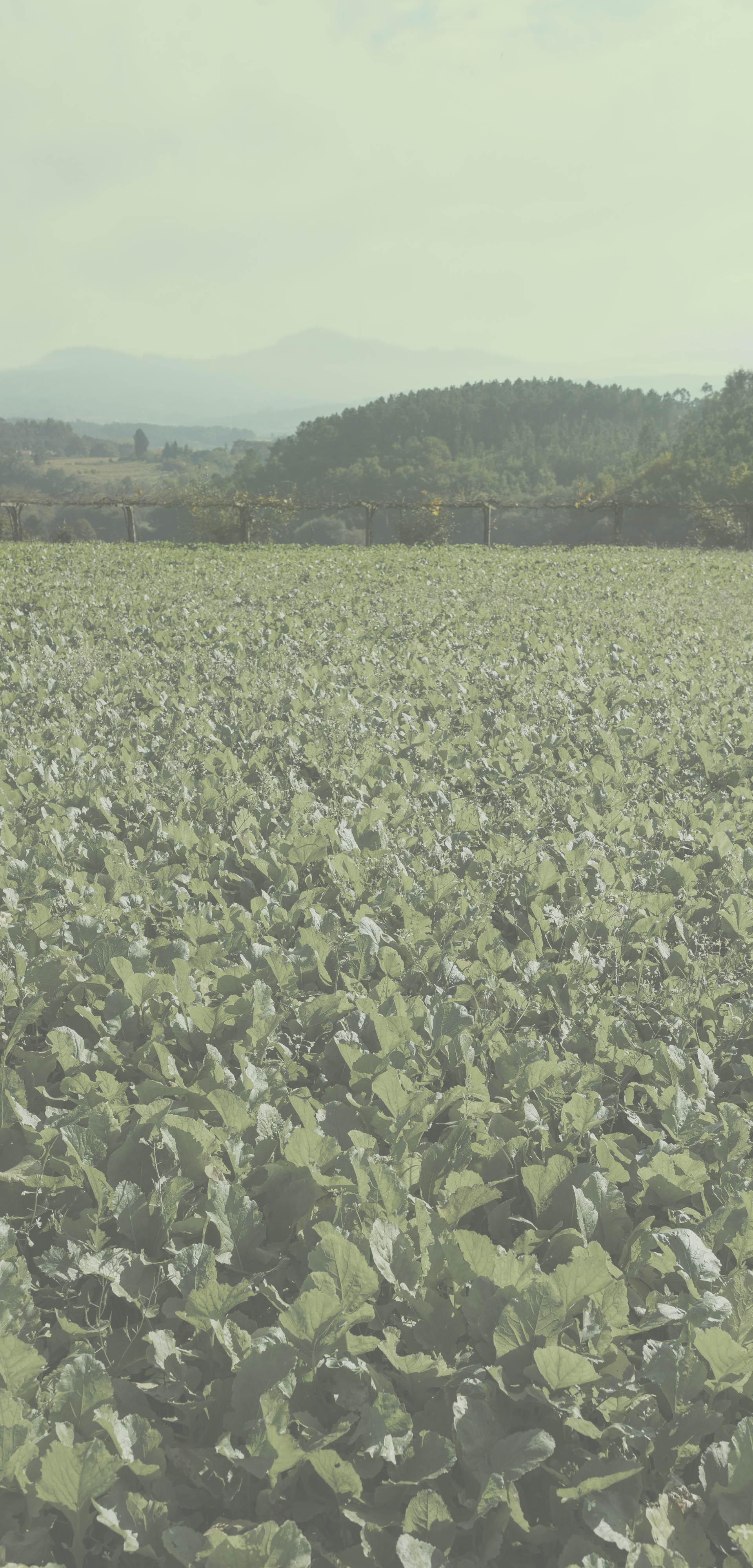 Fondo Grelos de Galicia