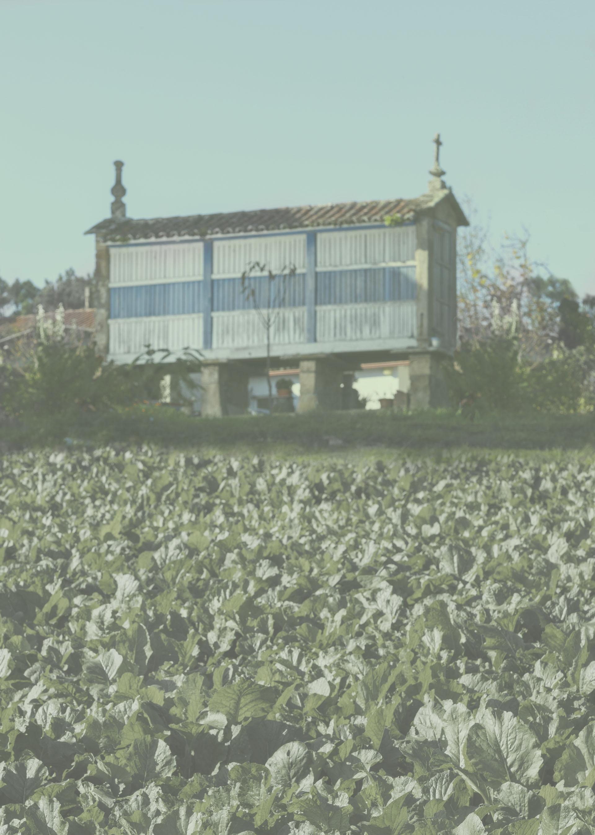 Fondo contacto de Galicia